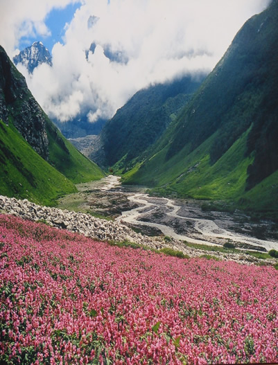 Uttarakhand-Valley of Flower Trek