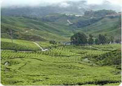 Gangtok Pelling Darjeeling By Flight
